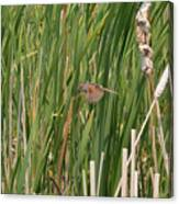 The Swamp Sparrow In-flight Canvas Print