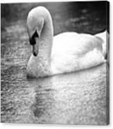 The Swans Solitude Canvas Print