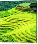 The Terraced Fields Scenery In Autumn Canvas Print
