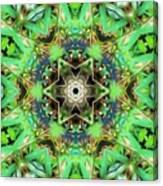 The Terrapin Star Canvas Print