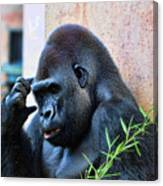 The Thinking Gorilla Canvas Print