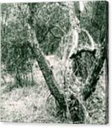 The Thinking Tree Canvas Print
