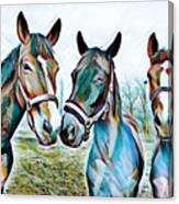 The Three Amigos Canvas Print