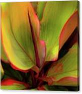 The Ti Leaf Plant In Hawaii Canvas Print