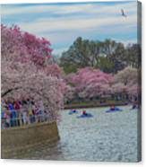 The Tidal Basin During The Washington D.c. Cherry Blossom Festival Canvas Print