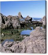 The Tidepools Of Bear Harbor Canvas Print