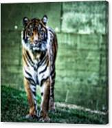 The Tigress Canvas Print