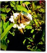 The Tiniest Skipper Butterfly In The Garden Canvas Print