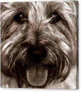 The Toto Canvas Print