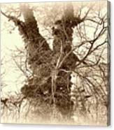 The Tree - Sepia Canvas Print
