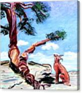 The Tree And The Bobcat Canvas Print