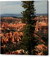 The Tree In Bryce Canyon Canvas Print