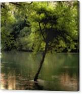 The Tree Island Canvas Print