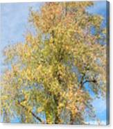 Town Tree  Canvas Print