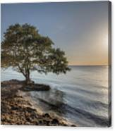 The Tree Of Life Canvas Print