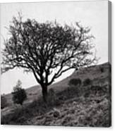 The Tree On The Fell Canvas Print