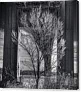 The Tree Under The Bridge Canvas Print
