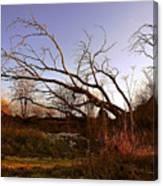 The Twilight Tree Canvas Print