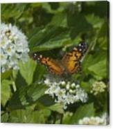 The Unnamed Butterfly Canvas Print