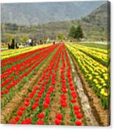The Valley Blooms Canvas Print