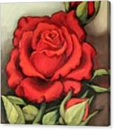 The Very Red Rose Canvas Print