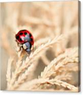 The Wandering Ladybug Canvas Print