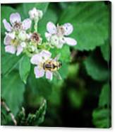The Wasp Canvas Print