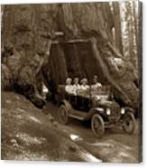 The Wawona Tree Mariposa Grove, Yosemite  Circa 1916 Canvas Print
