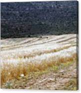 The Way To Nablus City Canvas Print