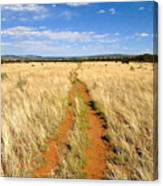 The Westward Trail Canvas Print