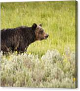 The Wet Grizzly Canvas Print