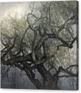 The Whispering Tree Canvas Print