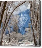 The White Forest Canvas Print