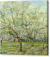 The White Orchard  Canvas Print