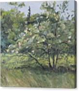 The Wild Apple Tree Canvas Print