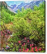 The Wildflowers Of Lundy Canyon Canvas Print