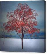 The Winter Berries Canvas Print