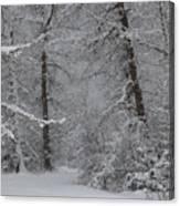 The Winter Path Canvas Print