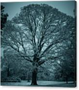 The Winter Tree Canvas Print