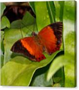 The Wizard Butterfly Canvas Print