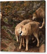 The Wolf Pack Canvas Print