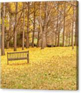 The Yellow Leaves Of Fall Carpet The Ground Of A Ginkgo Biloba Grove. Cm3 Canvas Print