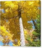 The Yellow Umbrella - Photograph Canvas Print