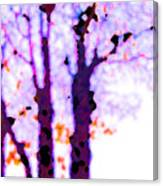 Thee Trees Canvas Print