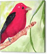 Theodore Tanager Canvas Print