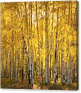 There's Gold In Them Woods  Canvas Print