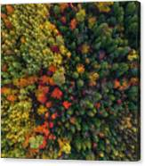 These Are Trees Canvas Print