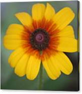 They Call Me Mellow Yellow. Canvas Print
