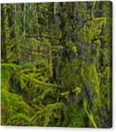 Thick Rainforest Canvas Print