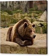 Thinker Bear Canvas Print